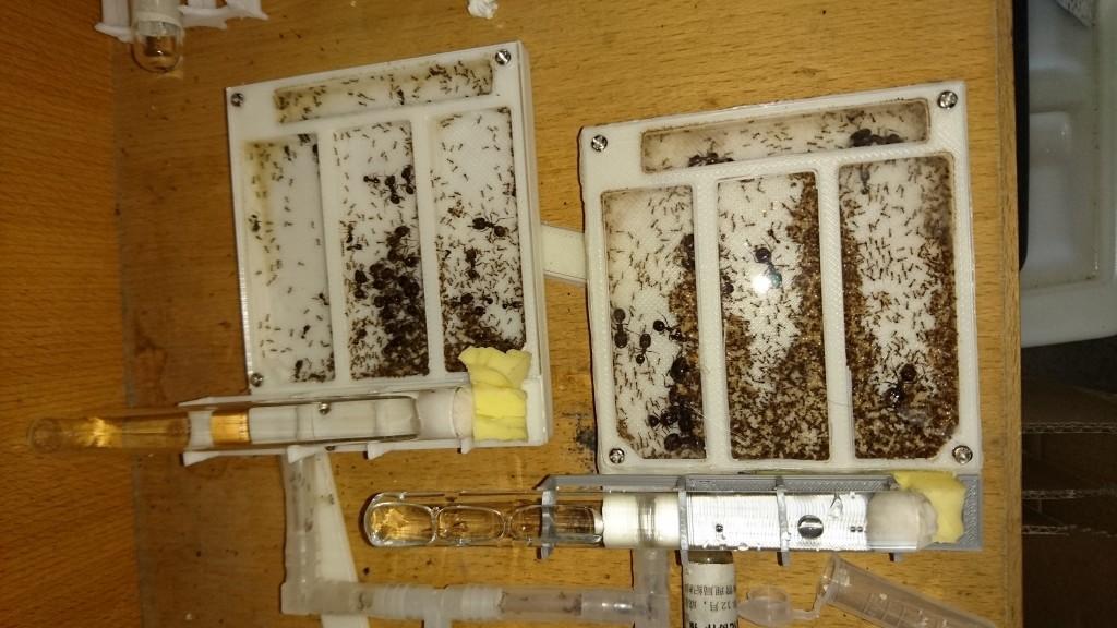日常拍摄,看来蚁后是打算在入口住下了,似乎以后并不喜欢太高的湿度