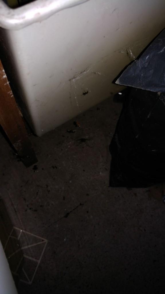 本地蜘蛛捕捉收获蚁,基本就是被吊打的程度
