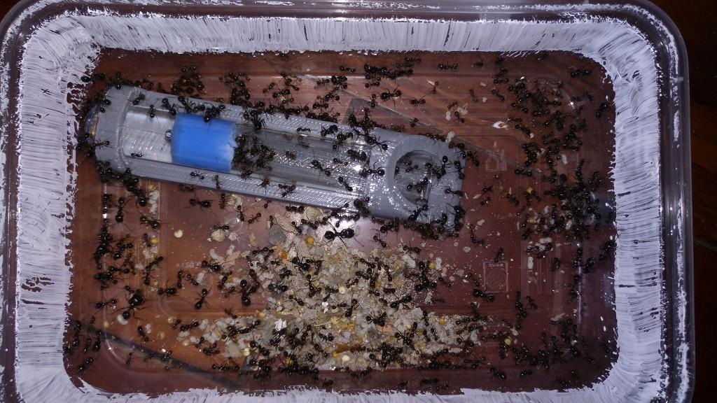 第一轮被回收回来的蚂蚁